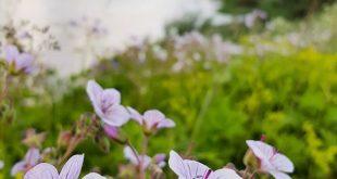 Midsommarfirandet är på topp här på Kläppens camping! 🍀 Det plockas blommor läng…